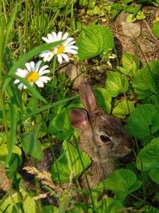 rabbit-811550_960_720